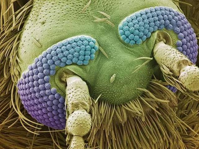 hlava-komara