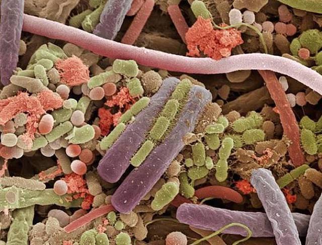 bakterie-na-jazyku