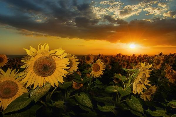 sunrise-photography-16