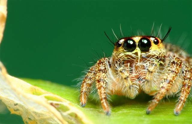 velkost-fotografii-macrodetail