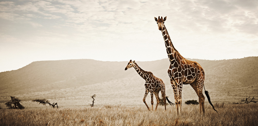 africa-photography-by-klaus-tiedge-photo-08