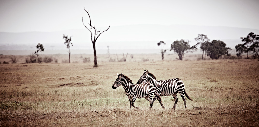 africa-photography-by-klaus-tiedge-photo-10