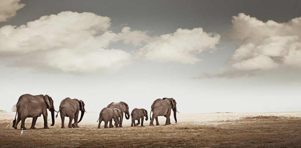 africa-photography-by-klaus-tiedge-photo-22