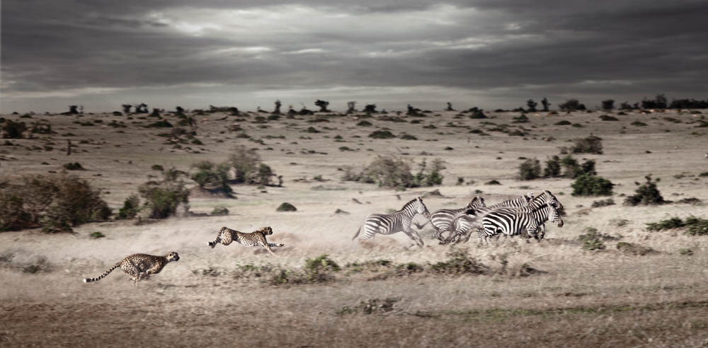 africa-photography-by-klaus-tiedge-photo-29