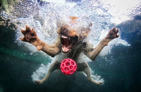 underwater-dog-photography-01