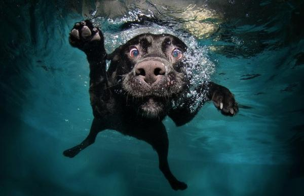 underwater-dog-photography-03