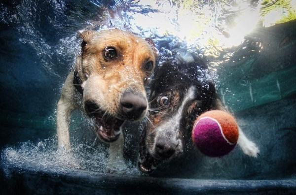 underwater-dog-photography-04