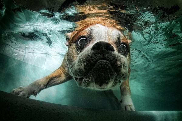 underwater-dog-photography-07