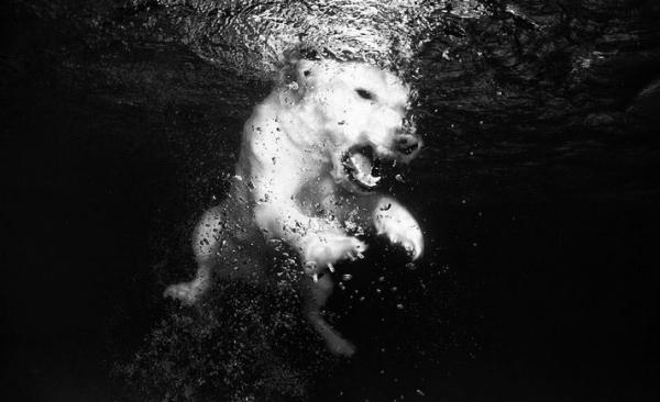 underwater-dog-photography-08