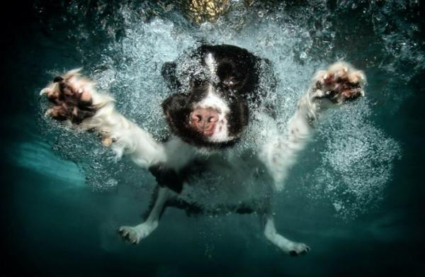 underwater-dog-photography-09