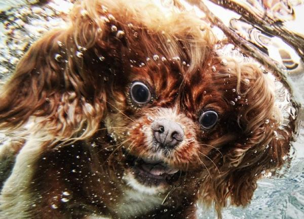 underwater-dog-photography-11