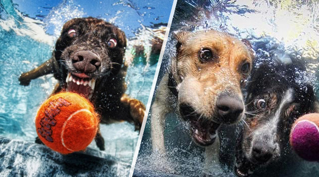 underwater-dog-photography-title