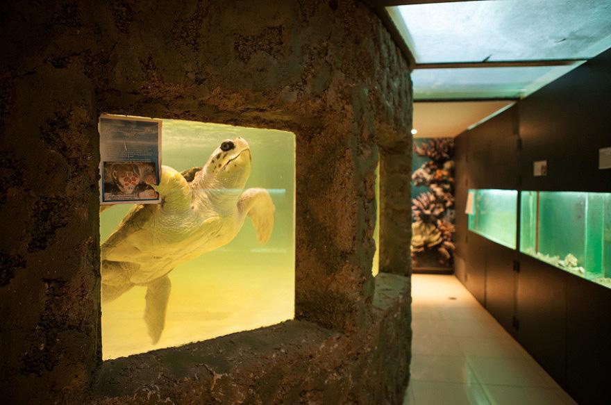zivot zvierat v zajati ZOO korytnačka