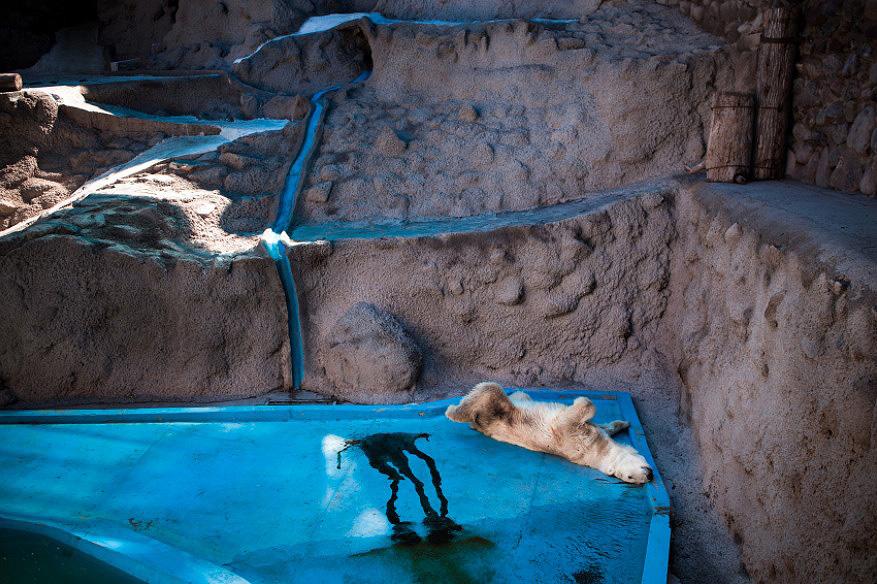 zivot zvierat v zajati ZOO medveď 2
