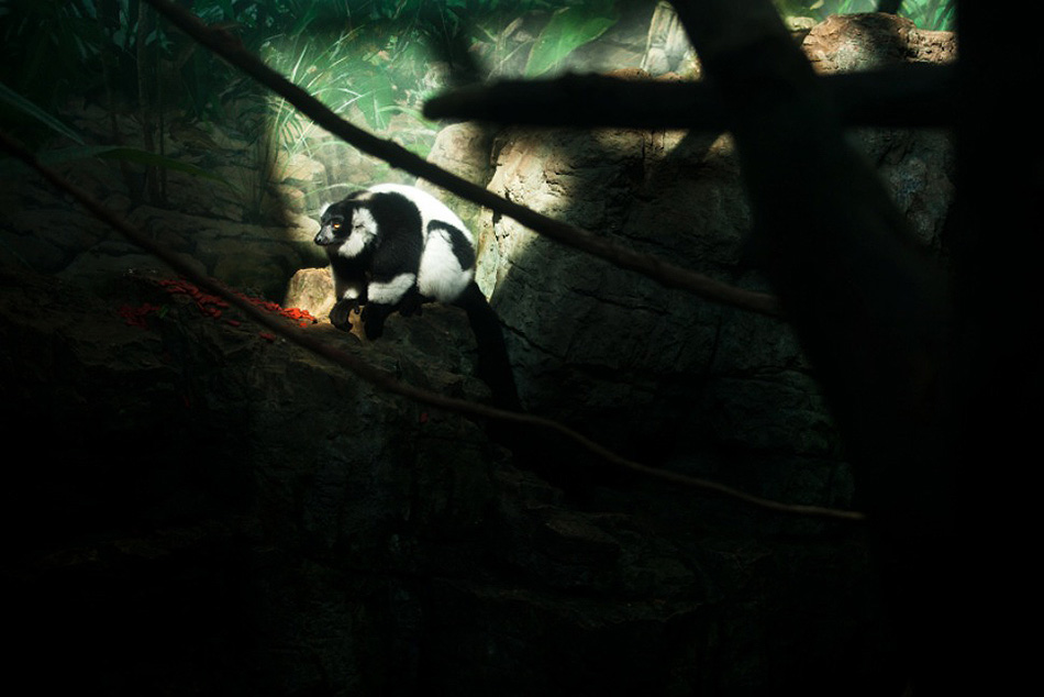 zivot zvierat v zajati ZOO opica 2