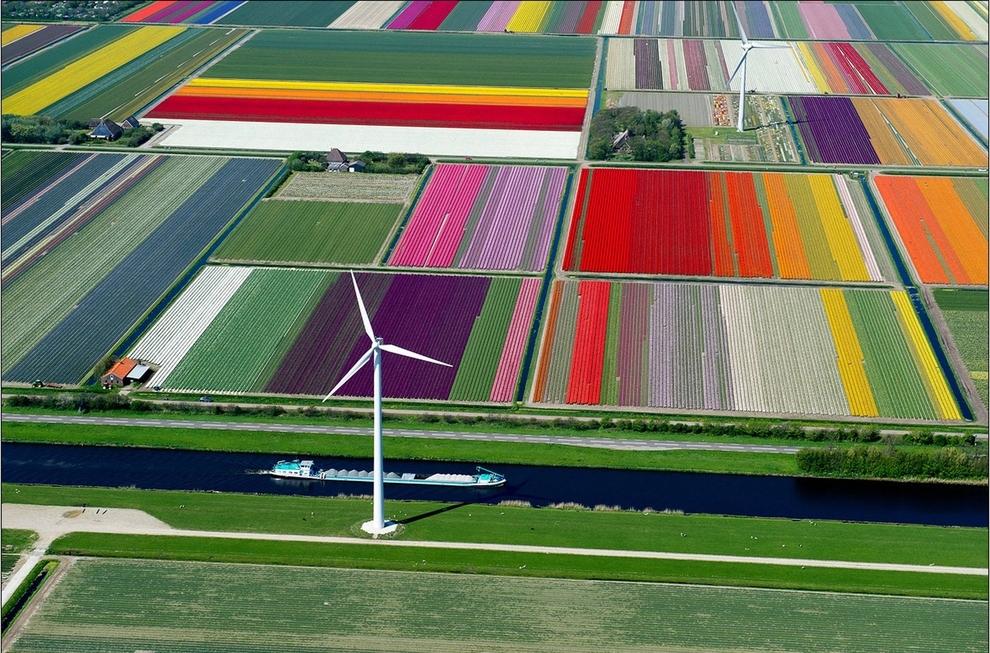 mesto z vtacej perspektivy 27 - tulipany holadnsko